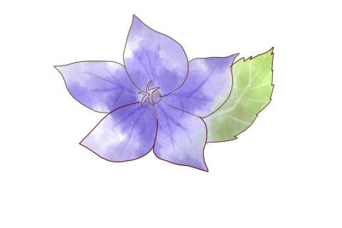 濃い紫色のキキョウのイラスト 無料イラストのimt 商用ok加工ok