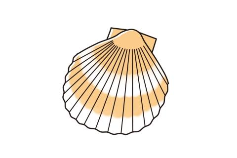 貝殻のイラスト 無料イラストのimt 商用ok加工ok