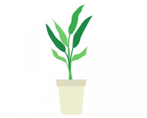 観葉植物が1つ置いてあるイラスト 無料イラストのimt 商用ok加工ok