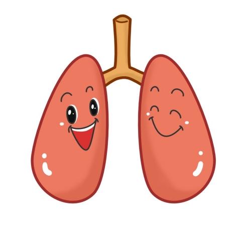 健康な肺のイラスト - 無料 ... : ひな祭り 幼稚園 : すべての講義