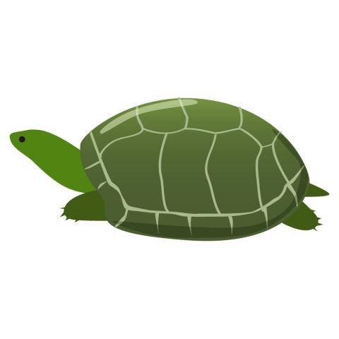 緑亀のイラスト 無料イラストのimt 商用ok加工ok