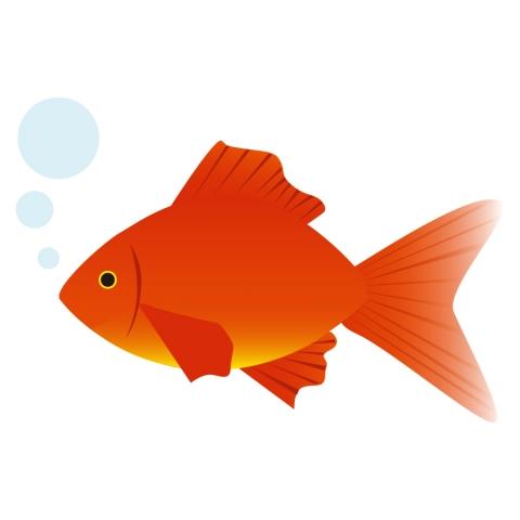 真っ赤な金魚1匹のイラスト 無料イラストのimt 商用ok加工ok