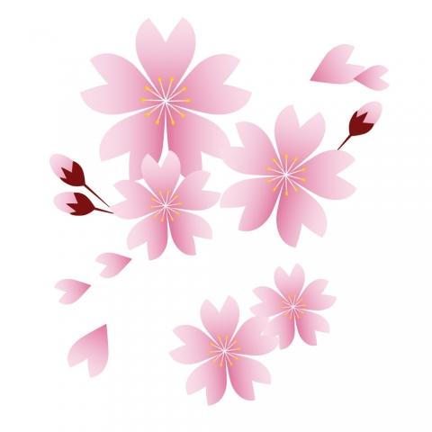 綺麗な桜の花びらのイラスト 無料イラストのimt 商用ok加工ok