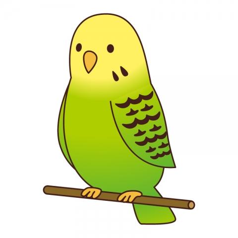 黄色と緑のセキセイインコのイラスト 無料イラストのimt 商用ok加工ok