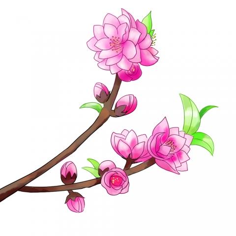 桃の花のイラスト 無料イラストのimt 商用ok加工ok