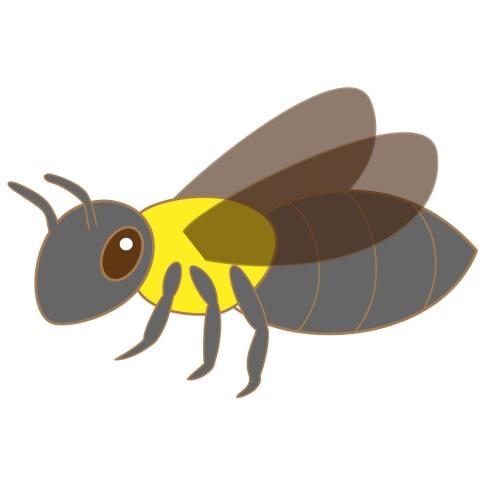 クマバチの画像 p1_20