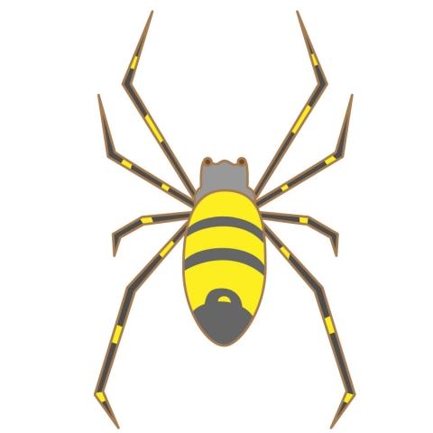 ジョロウグモの画像 p1_10